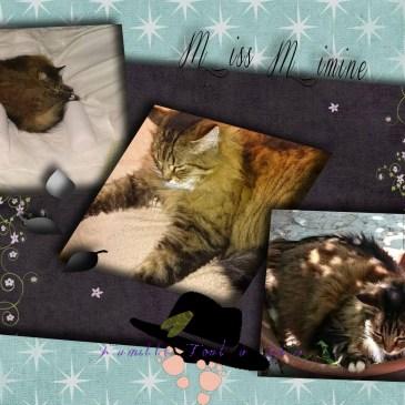 Miss Mimine abandonnée et adoptée malgré nous. Quand l'adoption d'un animal vient à toi sans le prévoir cause d'absence du propriétaire.