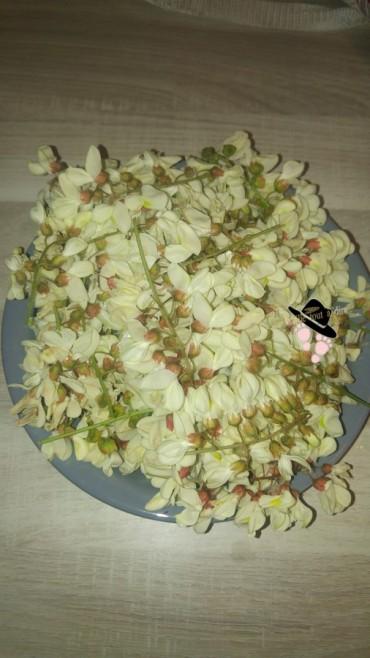 cueillette de fleurs d'acacia robinier