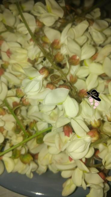 fleurs d'acacia robinier