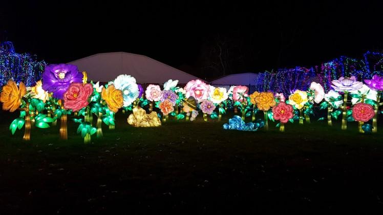 champs de fleurs festival de lanternes famille tout à dire