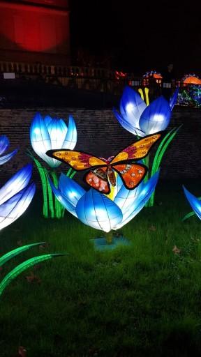 lanternes chinoises papillons et crocus gaillac famille tout à dire
