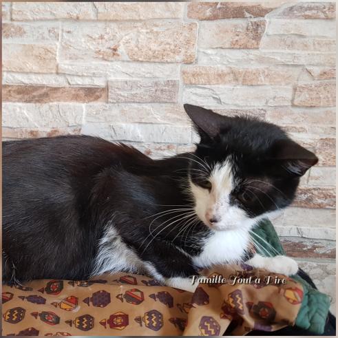 chatte abandonée sur Lunel au Parc les Petits Pins (1)
