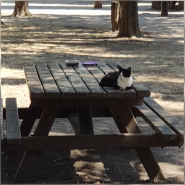 chatte abandonée sur Lunel au Parc les Petits Pins (3)