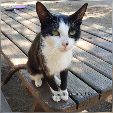 chatte abandonée sur Lunel